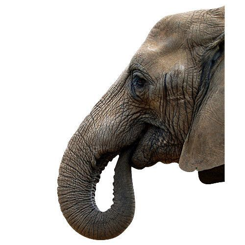 Kriscounette ferme son blog page 111 for Tableau tete d elephant