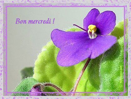 6)  BON  MERCREDI