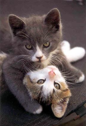 image amour de chat