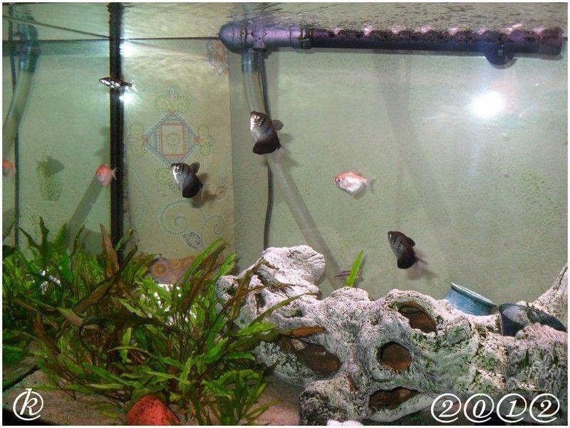 Kriscounette ferme son blog for Aquarium eau chaude