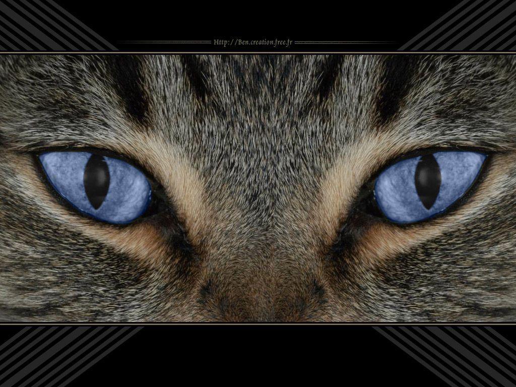 13 yeux de chat. Black Bedroom Furniture Sets. Home Design Ideas