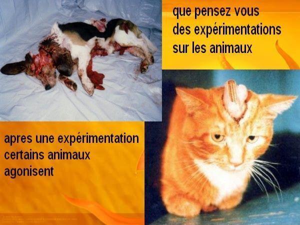 4) LES EXPERIMENTATIONS