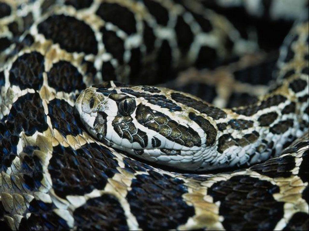 serpent (2)